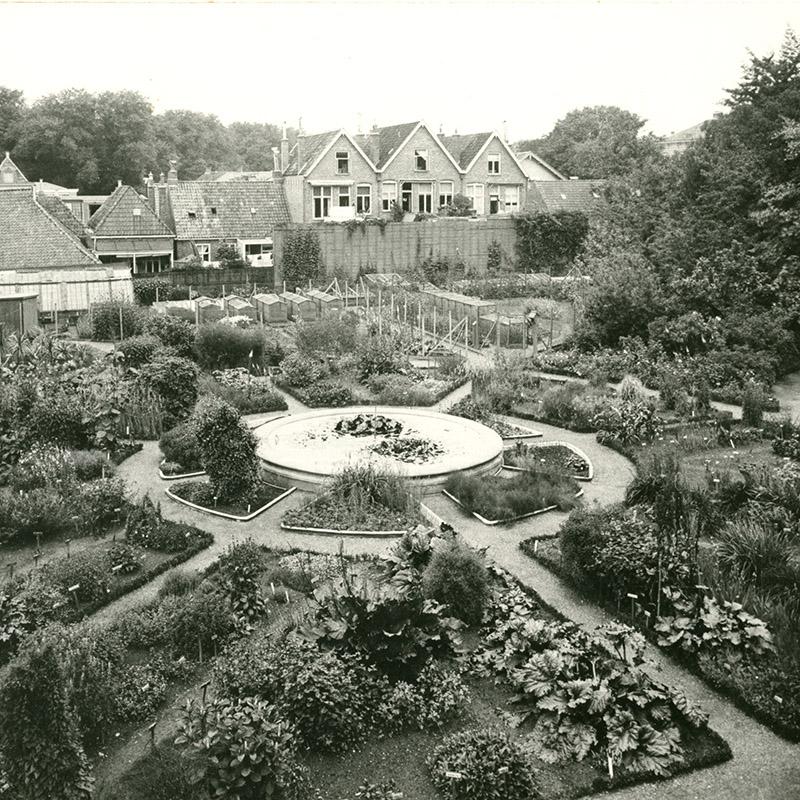 Foto P. Kramer, Groninger Archieven